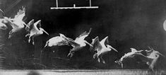 Chronophotography by Étienne-Jules Marey.