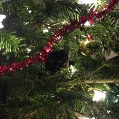 Very unusual Christmas tree decoration! Don't forget to share your tree pictures on our facebook pageand we'll share the best o...