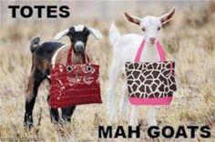 OMG. Totes Mah Goats FABULOUS
