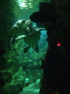 Aquarium brighton! :)