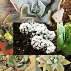 #portfairy #Australia #Victoria #garden #cactus #plant #plants #gorgeous #instadaily #gardening by sh86mummalette http://ift.tt/1UokfWI