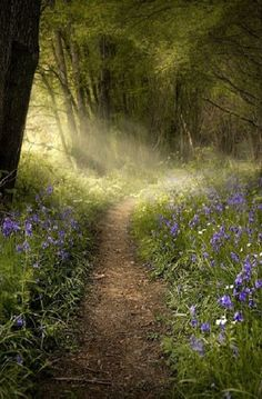"Love this. A walk in the woods is always great :)//followthewestwind: ""(via Pin by Kenneth Anthony on My Shire 