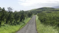 Hwy 31 Southern Maui - I love how you can see the dirt road winding it's way over the coming hills