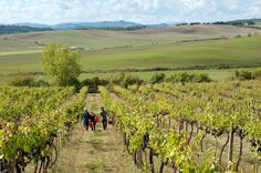 "Is the best way into the world of Italian wine with farmers who say things like ""our work is to enter the rhythm of the planets""?"