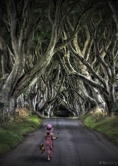 The Dark Hedges – Located in Bregagh Road near Armoy, in Northern Ireland. It is a unique stretch of Beech Trees. This lovely avenue of beech trees was planted by the Stuart family in the eighteenth century.