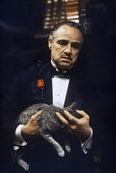 The Godfather Marlon Brando Stock Pictures, Royalty-free Photos & Images Marlon Brando, The Godfather Wallpaper, Godfather Movie, American System, Anthony Quinn, Francis Ford Coppola, Greys Anatomy Memes, Cinema, Making A Movie