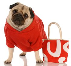 Dogs and Shopping: two of my favorites! From Shutterstock.com.