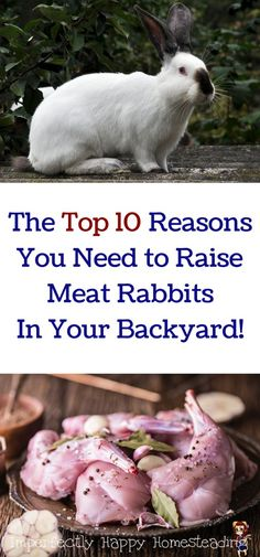 The Top 10 Reasons You Need to Raise Meat Rabbits in Your Backyard. Great for homesteads, urban farms and backyard farmers / homesteaders.