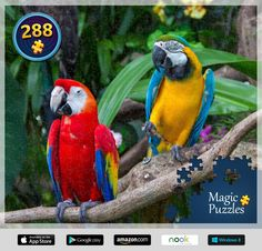 Find Colorful Macaws Forest stock images and royalty free photos in HD. Explore millions of stock photos, images, illustrations, and vectors in the Shutterstock creative collection. of new pictures added daily. Free Jigsaw Puzzles, Image Storage, Kinds Of Birds, Nature Animals, Beautiful Birds, Royalty Free Photos, Photo Editing, Stock Photos, Magic