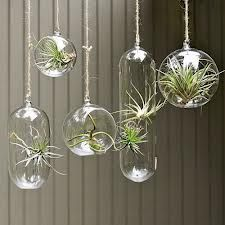 hanging plants in glass baubles