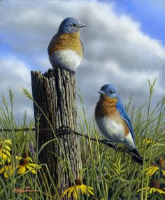 Spring Bluebirds   by Robert Hautman