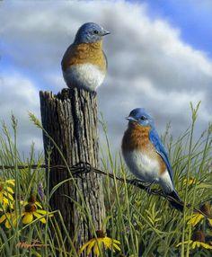 Spring Bluebirds   by Robert Hautman