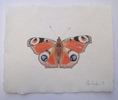 Peacock butterfly drawing, original watercolour art by Ele Grafton. Prints of the drawing are available.