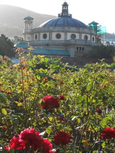 Aromatic Gardens of Cape Town