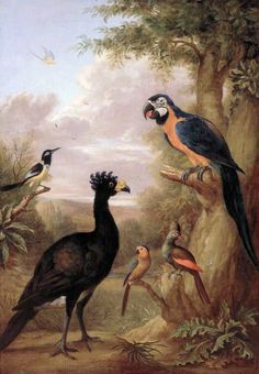 Various Types of Birds (with a Black Bird and a Parrot), late 19th century, After Tobias Stranover (1684-after 1731)