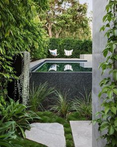 """Outdoor Designer Store on Instagram: """"This Hawthorn Project is nestled in an oasis of green walls and a wet edge pool designed for minimal fencing and maximum visual impact.…"""" Garden Features, Water Features, Swimming Pool Designs, Swimming Pools, Fence Design, Garden Design, Building A Pool, Interior And Exterior"""