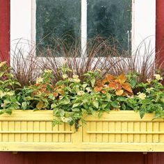 A window box adds living personality to your home. Sun or shade, there is a combo that will suit your setting and style. Fall Window Boxes, Window Planter Boxes, Old Window Shutters, Ornamental Cabbage, Boxwood Topiary, Garden Boxes, Garden Ideas, Fence Ideas, Wooden Pergola