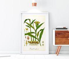 Hops Plant, Wall Art Prints, Fine Art Prints, Herb Wall, Ginger Plant, Plant Art, Botanical Illustration, Botany, Original Image