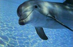 The smile of a dolphin.