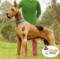 Scooby doo ¿Dónde estás? . #halloween #disfraces #dog #perro #canino #mundocanino #mundocaninooficial #diversión #dulces #nocheDeBrujas #miedo #perroDisfrazado #DisfrazDePerro #Feliz #Ternura #Ipod #scoobydoo #Dali #odontologo #starbucks #BreakingBad #calabaza . @mundocaninoofi la cuenta más canina de pinterest