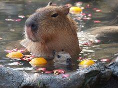 """""""kogumarecord:  ベル・エポックへようこそ。貸し切り露天風呂やフルコース料理で伊豆高原の優雅な休日をどうぞ  """""""