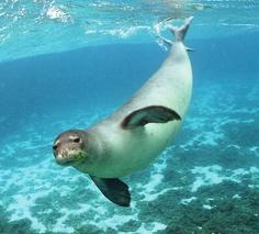 Sea Lion up Close!