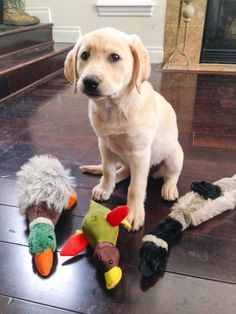 Duck, duck, goose.