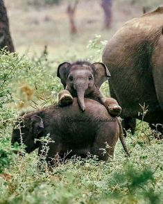 Aww cute fuzzy animals — Photogenic baby elephan… – Oh, süße Fuzzy-Tiere – Fotogenes Elefantenbaby … – Baby Animals Pictures, Cute Animal Pictures, Animals And Pets, Smiling Animals, Happy Animals, Nature Animals, Baby Elephant Pictures, Small Animals, Nature Nature