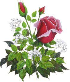 Flower Animation