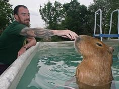 capybara kindness - Google Search