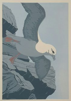 Fulmar - linocut - John Hatton, U. Printmaking, Rooster, Bird, Animals, Birds, Animales, Animaux, Printing, Roosters