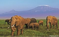 End Elephant Slaughter - Save Their Tusks