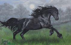 SOLD. Black Beauty. Acrylic horse on Canvass. 40x50cms £250.00