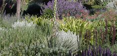 Xeriscape - Very Drought Tolerant Plants