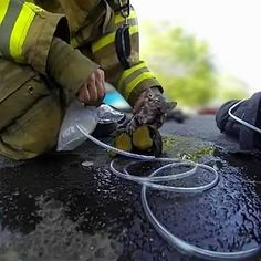 A Fresno firefighter rescues a small kitten and brings kitten back to life. Amazing!