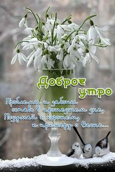 Beautiful Flowers, Beautiful Pictures, Good Morning, Logo Design, Wallpaper, Words, Nature, Plants, Coffee Time
