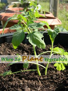 Are you going to have a garden this year? If so, you may want to check out my tips on When to Plant Vegetables. http://reusegrowenjoy.com/when-to-plant-vegetables/