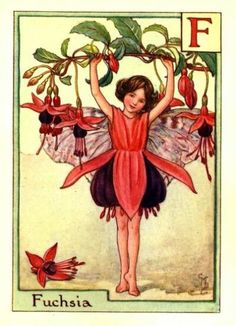 """F = Fuchsia Fairy by Cicely Mary Barker. Alphabet Flower Fairies, print """"A Flower Fairy Alphabet""""; Poems and Pictures by Cicely Mary Barker, Published by Blackie & Son Limited, London Cicely Mary Barker, Fairy Land, Fairy Tales, Tattoo Oma, Vintage Fairies, Beautiful Fairies, Flower Fairies, Fantasy Illustration, Illustrators"""