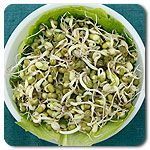 Organic Mung Beans Sprouts