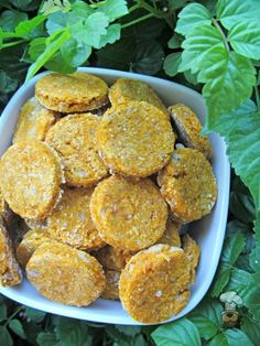 (wheat-free) pumpkin chicken dog treat recipe