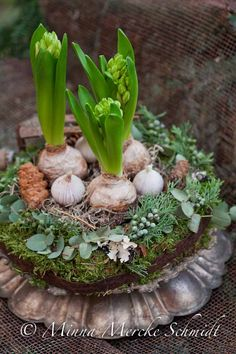 hyacinths, garlic, moss… by blomsterverkstad Christmas Wreaths For Windows, Christmas Flowers, Christmas Mood, Christmas Decorations, Love Garden, Garden Shop, Garden Art, Bulb Flowers, Flower Pots