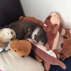 An otter sleeping with stuffed otters doubling their otterness ^_^ #AnimalsandPets