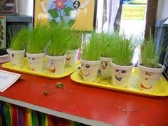 Hairy Heads experiment with FREE download - in blog look under April, plants to see the first post of how kids planted the seeds