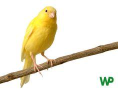 Alimentación y accesorios para pájaros.  Tienda de mascotas online Wakuplanet.com