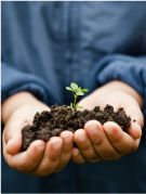 Hands with seedling: Celebrate both #food and #community with your #students