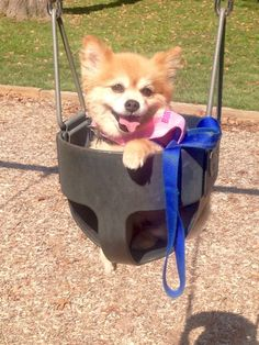 This dog isn't even swinging, and she's perfectly content with life.