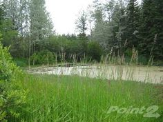 Land for sale in Almost 12 Acre Lot with Pond and year-round Access, Horsefly, British Columbia Real Estate News, Real Estate Houses, New Property, Land For Sale, British Columbia, Open House, Acre, Pond, Coast
