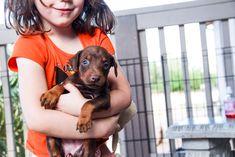 www.elitek-9.com  #doberman, #protectiondogs, #CEO, #militaryk9, #exotics Doberman Pinscher, Exotic Cars, Puppies, Dogs, Cubs, Pet Dogs, Doberman, Doggies, Luxury Cars