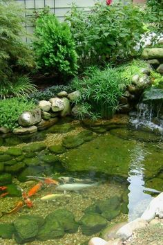 50 Awesome Koi Pond Plans You Can Create Yourself To Accent Your Backyard Backyard Water Feature, Ponds Backyard, Garden Ponds, Backyard Waterfalls, Garden Water, Backyard Ideas, Pond Landscaping, Landscaping With Rocks, Landscaping Design