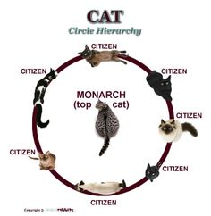 how to fix cat heirarchy